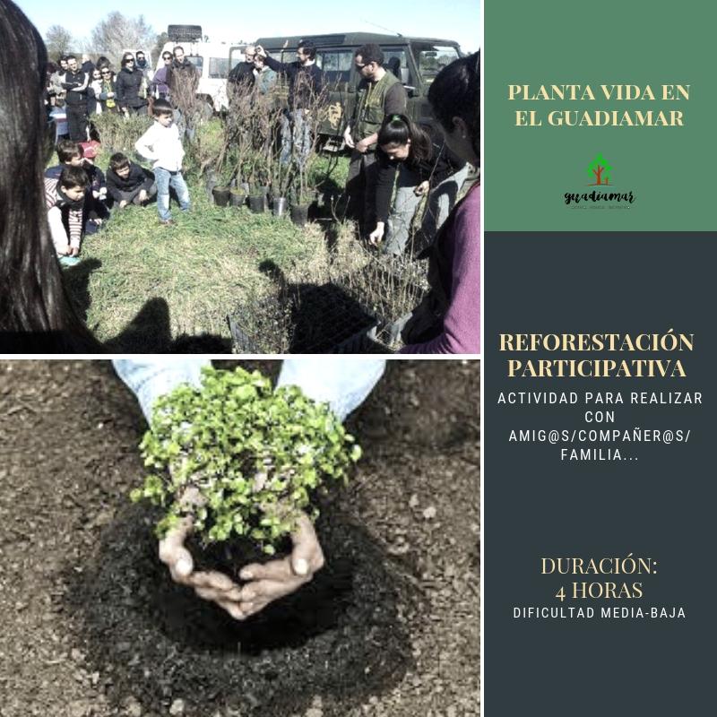 Reforestación participativa