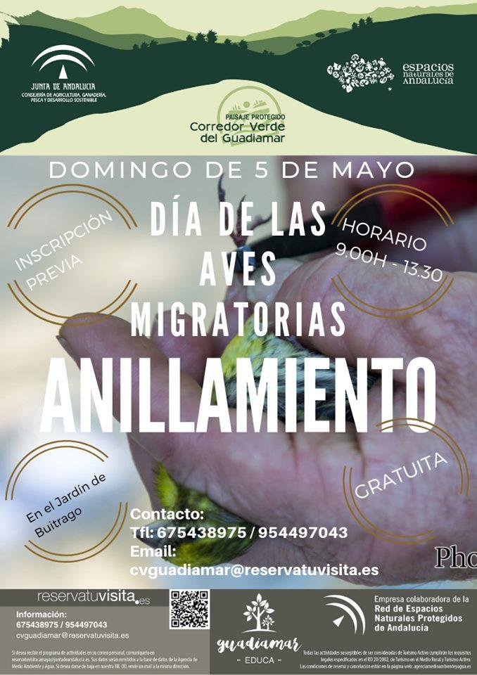 CARTEL ANILLAMIENTO 5 DE MAYO