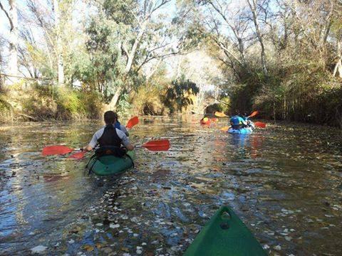 Kayaks en el Guadiamar